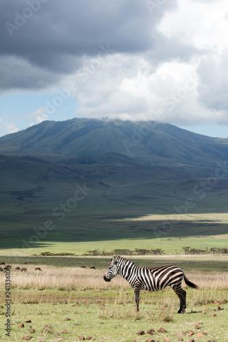 Zebra standing with Tanzanian mountaneous landscape in background © pmikkonen
