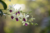 Orchid flower in nature with blurred background.