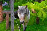 Égua no Campo - 241349545