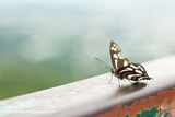 The butterfly is stuck on the iron rail.