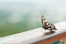 """Постер, картина, фотообои """"The butterfly is stuck on the iron rail."""""""