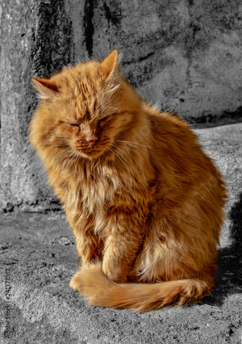 Italian cat in complete relaxation - 241378162