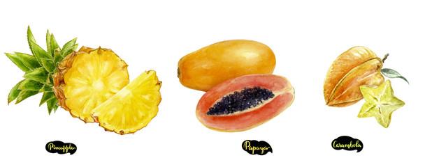 Carambola, pineapple, papaya set watercolor hand drawn illustration. © diidik