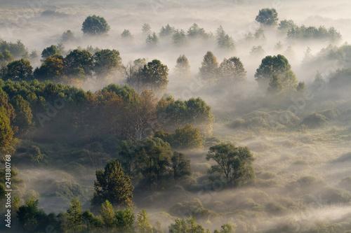 Panorama autunnale sulla foresta con la nebbia, Italia - 241380768