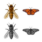 Isolated object of insect and fly icon. Collection of insect and element stock symbol for web.