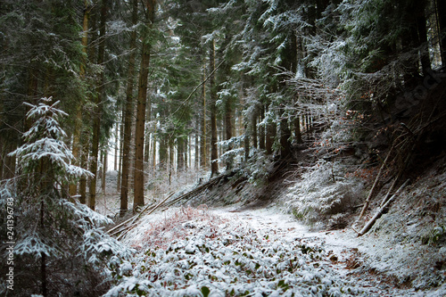 Walking path in a snowy forest