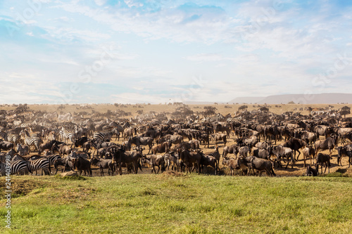 Large group of african safari animals.