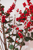 decorative Christmas themed bunch of eucalyptus red holly berries and cotton - 241419117