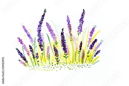 Hand drawn watercolor lavender - 241422952