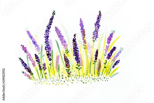 Hand drawn watercolor lavender - 241422952