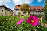 Flowers on a meadow in Aalen - 241423933