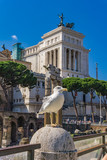 Seagull by the Vittoriano monument in Rome