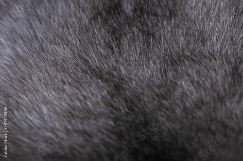 Natural fur for texture or background. Luxury and elegant fluffy clothes.