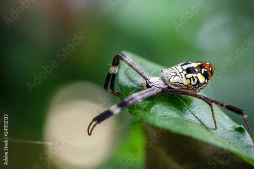 close up macro spider on leaf - 241512133