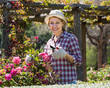 Leinwanddruck Bild - Elderly woman gardening pink roses .