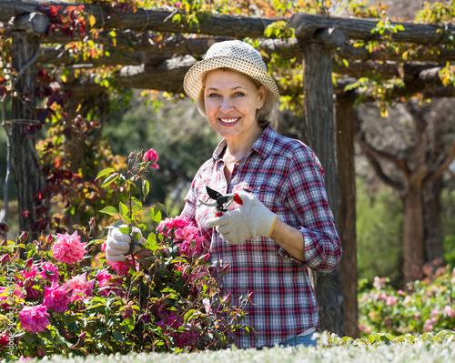 Leinwanddruck Bild Elderly woman gardening pink roses .