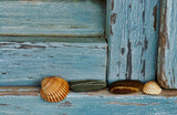 Still life with sea shells and pebble on blue wooden background - 241518733
