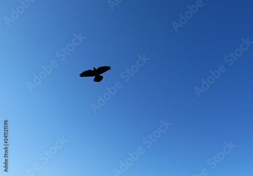 Bird in the blue sky - 241521596