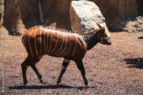 fotografias de animales varios  - 241535941