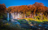 Shiraito Falls with Colorful autumn leaf in Fujinomiya, Shizuoka, Japan. - 241542306