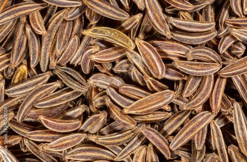 macro image of cumin seeds 2x magnification - 241568506