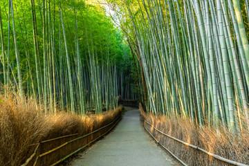 beautiful walkway in green bamboo forest, tourist famous place in Japan, Kyoto, Arashiyama