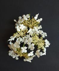 White liliac petals background