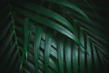 Deep dark green palm leaves pattern. Creative layout, toned image filter effect - 241593746