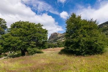 arboles y montaña de fondo