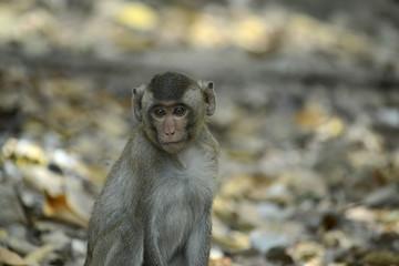 kleiner  Affe in Südostasien © R+R