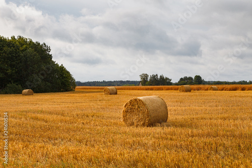 Leinwanddruck Bild Hay stacks (sheafs) in a summer field
