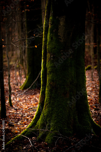 Soft light in the forest