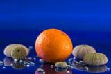 mandarin of the mediterranean - 241621599