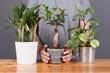 choice plant