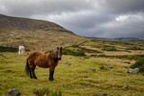 Brown Horse in a Mountain Field