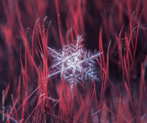 Snowflake beautifull on the colorful background macro - 241636725