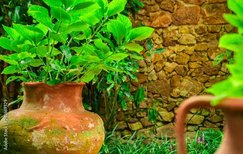 Leinwandbild Motiv Beautiful exotic plants in pots. Green leaves. Tropical wallpaper.