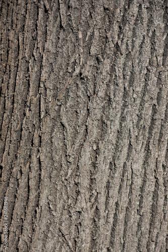 bark of a tree © Галина Миронюк