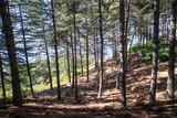 Fototapeta Fototapety na ścianę - Beautiful summer forest with different trees , pine forest © Esin Deniz