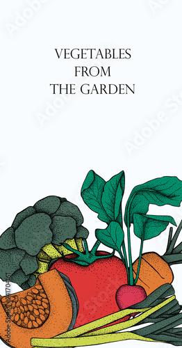Banner with vector vegetables. Concept healthy food. Onion, pumpkin, leek, broccoli, carrot, tomato, radish.