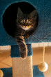 Rested cat, in his play house