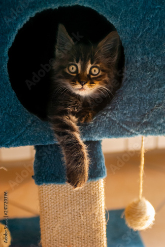 Rested cat, in his play house - 241720396