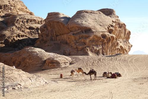 Jordan. Wadi Rum with camels