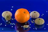 tangerine with marine satellites in a huge blue - 241723375