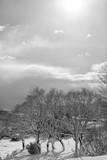 Paesaggio invernale, alberi innevati nel parco nazionale D'Abruzzo Lazio e Molise  - 241748365