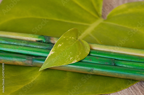 wellness spa zen still life with green leaves and bamboo sticks
