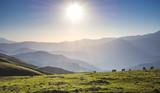 Wild grass on highland meadow  in Artvin in Turkey - 241787583