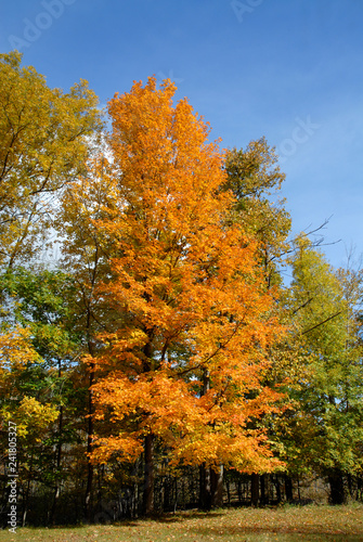 mata magnetyczna Fall colors
