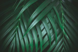 Deep dark green palm leaves pattern. Creative layout, toned image filter effect - 241809376