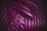 Deep dark purple colored palm leaves pattern. Creative layout, toned image filter effect - 241810598